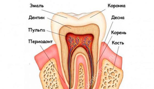 Из чего состоят зубы